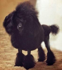 black poo photoshoped