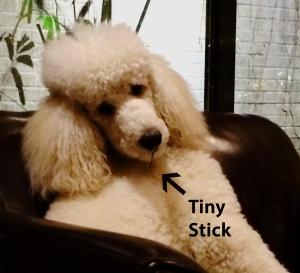 tiny stick