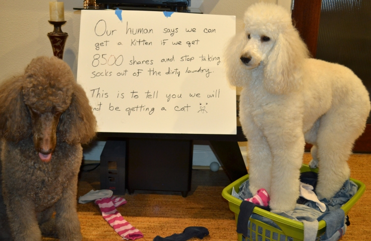 Dog shame and share
