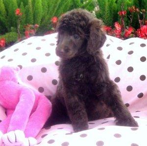 posing pretty puppy