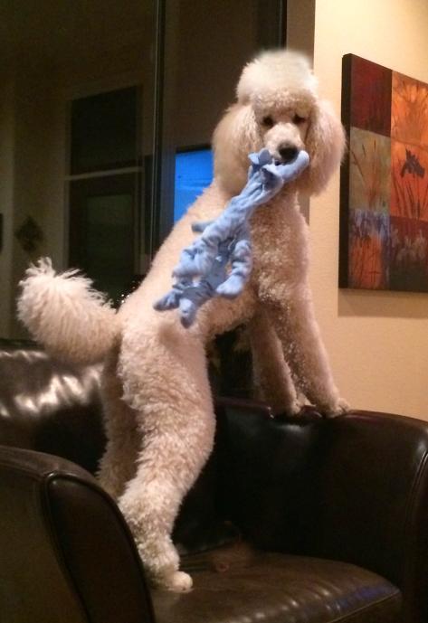 sherlock in my mouth blue toy